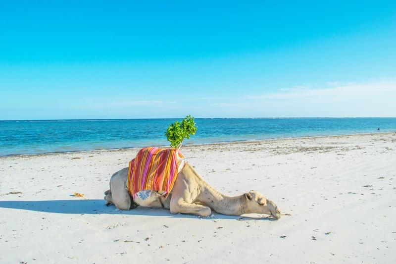 MarcyYu_Kenya_Diani_Beach10