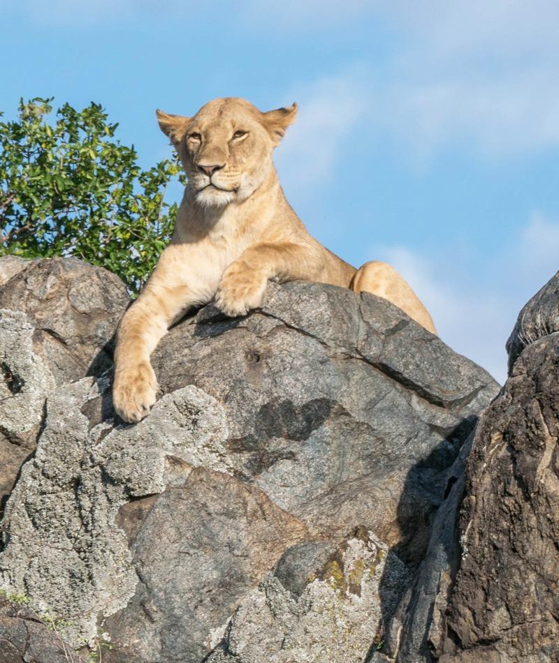 MarcyYu_Tanzania_FourSeasons_Serengeti1