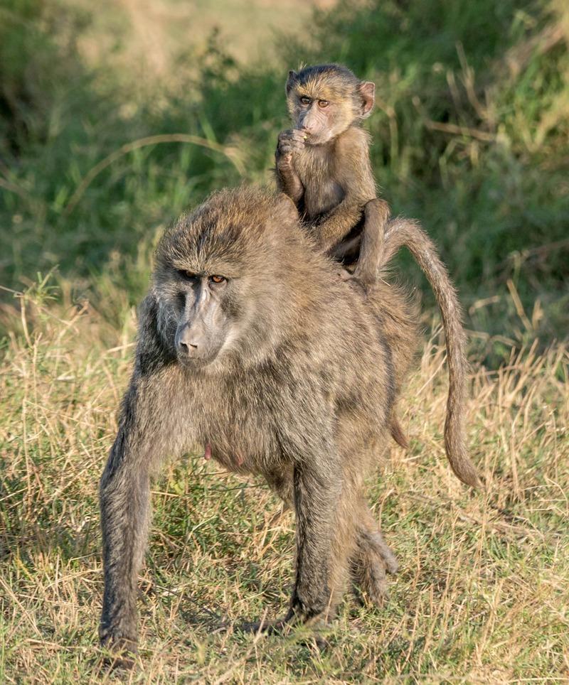 MarcyYu_Tanzania_FourSeasons_Serengeti4