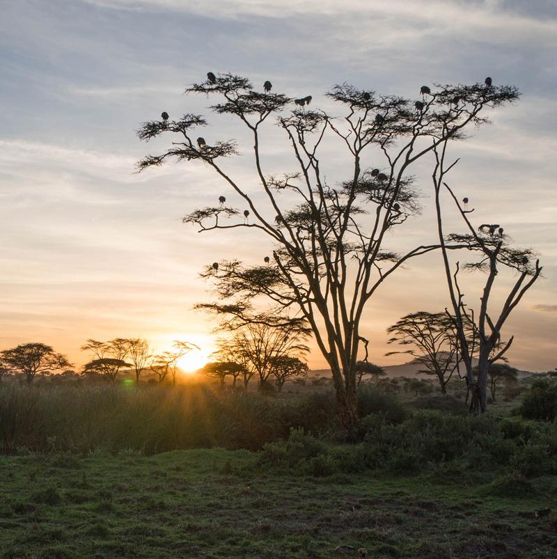 MarcyYu_Tanzania_FourSeasons_Serengeti9