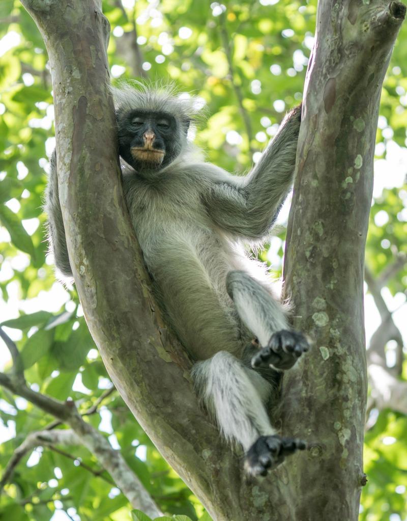 MarcyYu_ParkHyatt_Zanzibar_Tanzania4